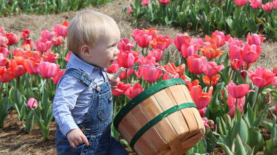 tulip field with boy